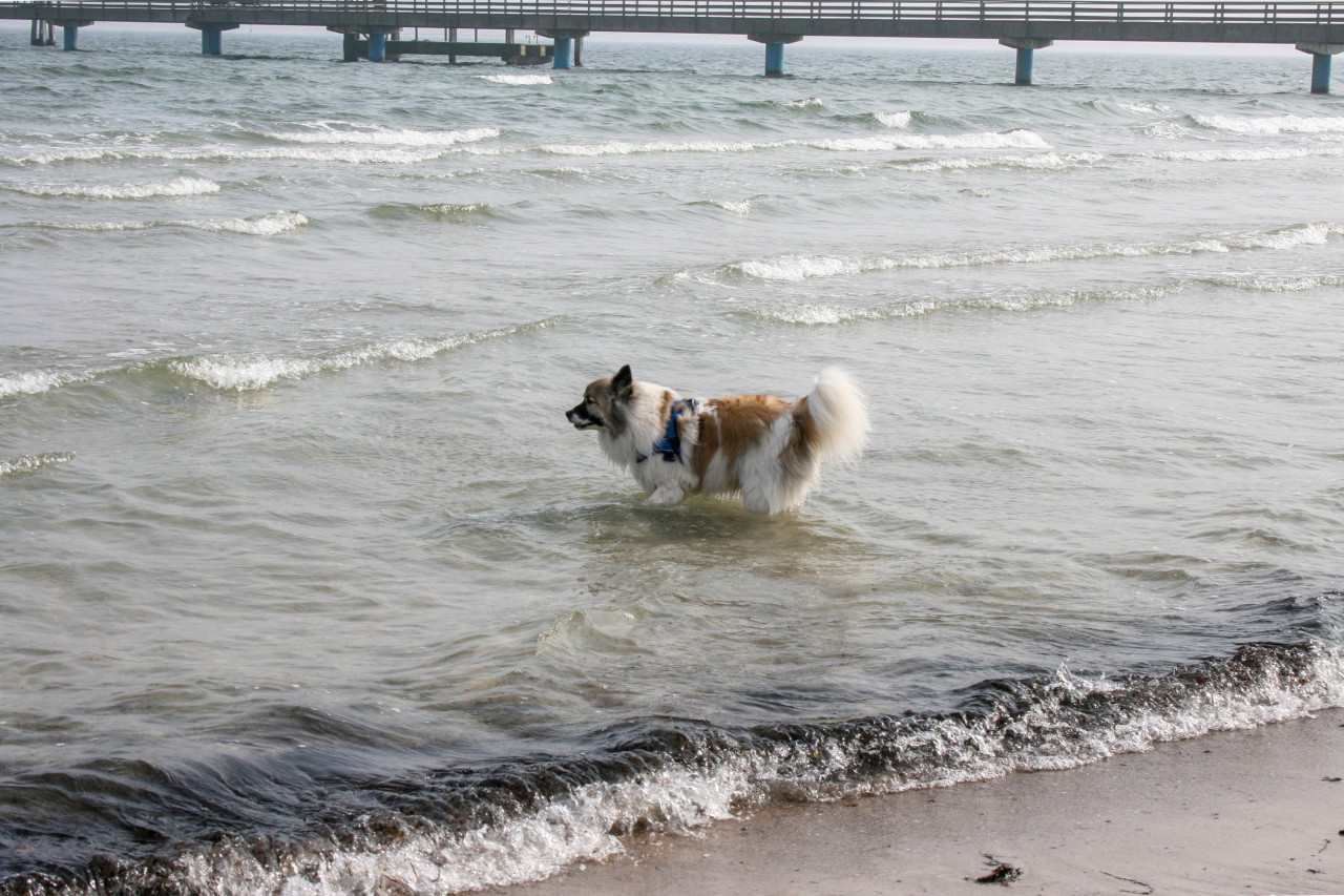 Dog in the water of the Baltic Sea