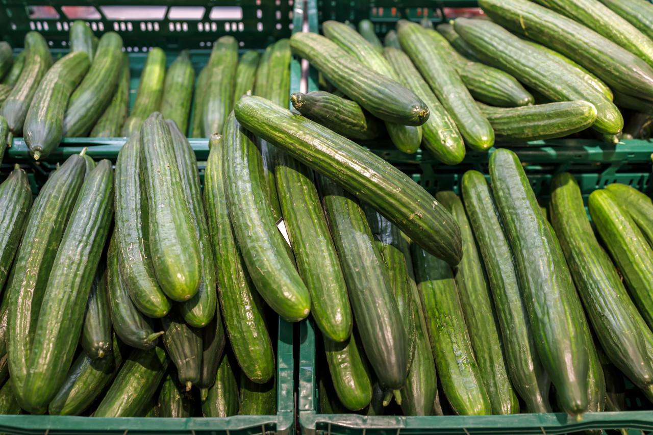Freshly harvested small and big green vegetables in boxes on farmers market shelves close-up.