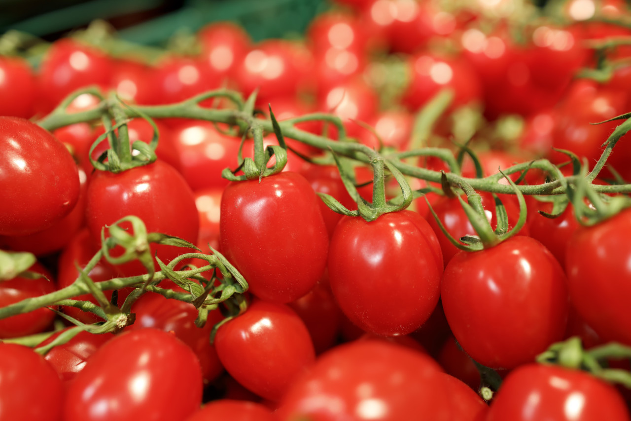 cherry tomatoes on vine in a supermarket