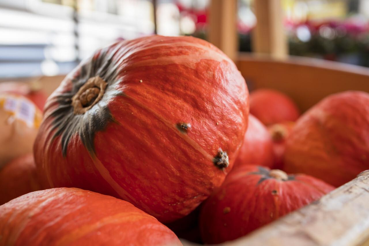 Pumpkins Gourds on Farmers Market