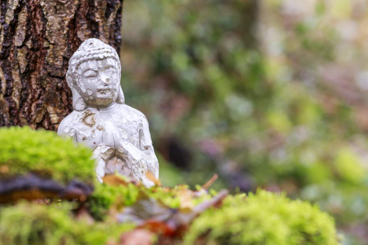 Buddha statue in a forest