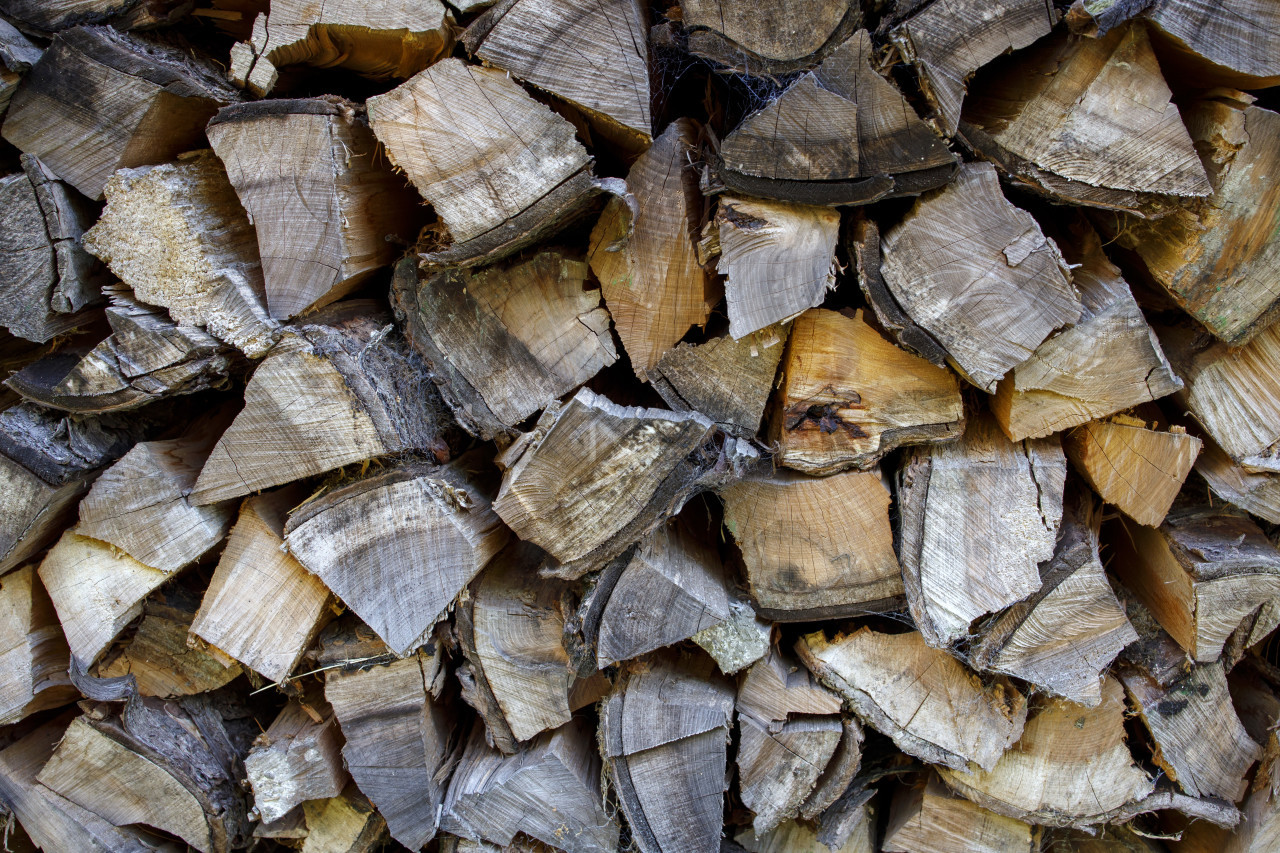 Dry chopped tree logs background