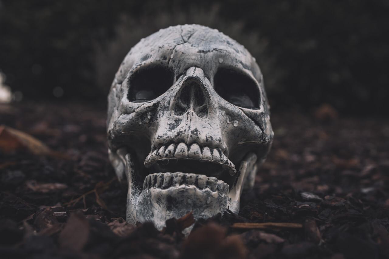 Halloween Skull on the autumn floor