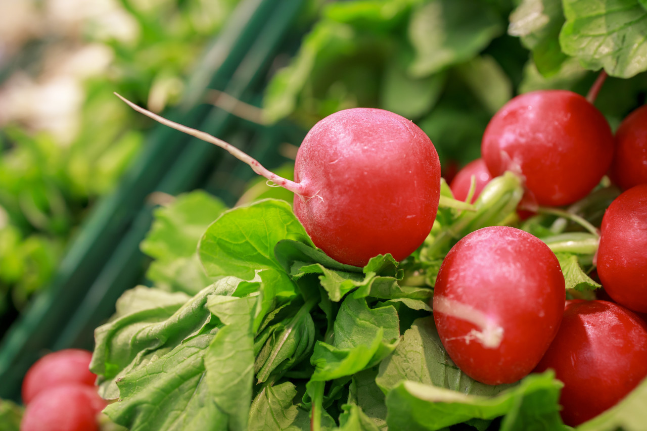 fresh red radish from the market background
