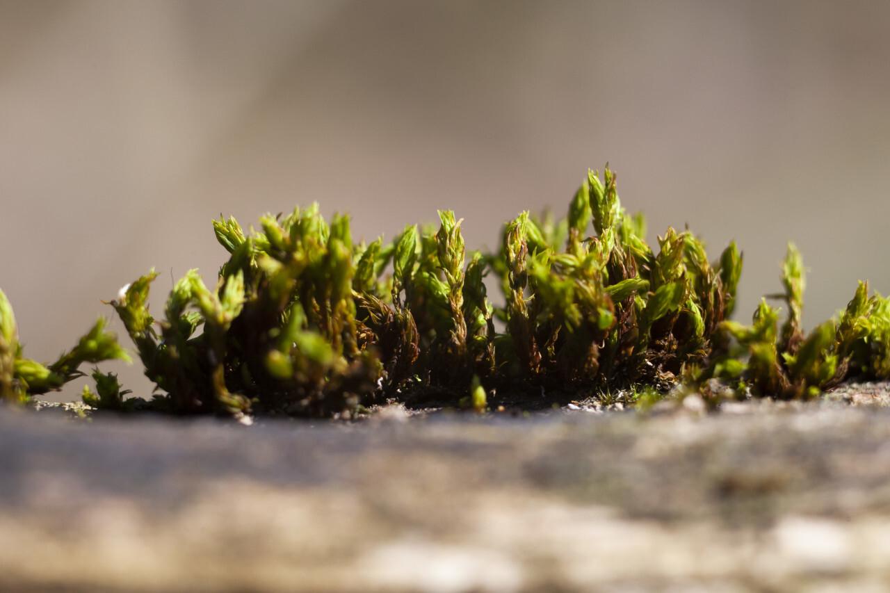 Moss on a tree close-up