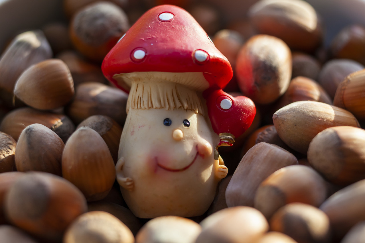 A cute toadstool figure in the middle of hazelnuts