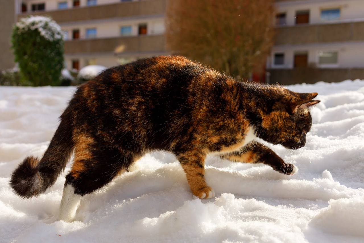 Cute cat walks in snow