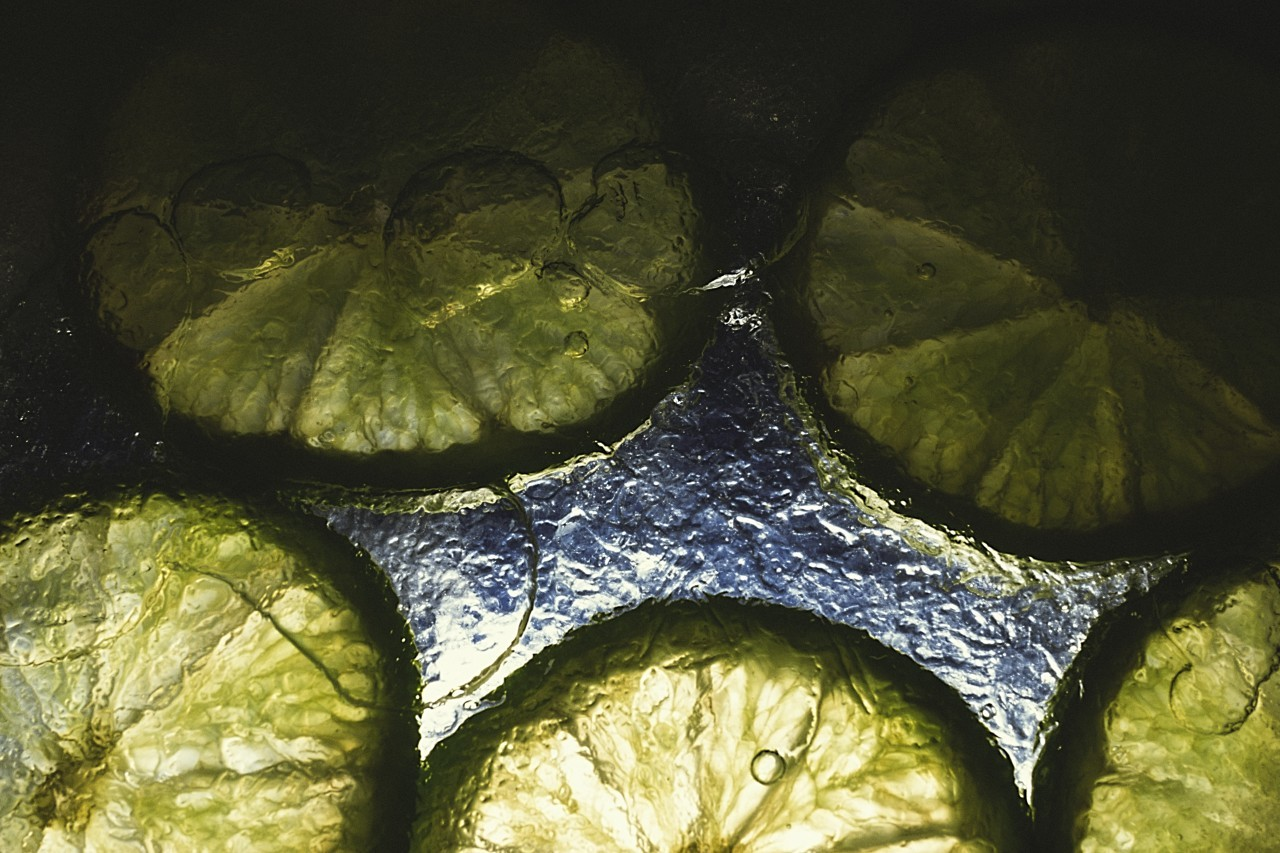 limes in ice