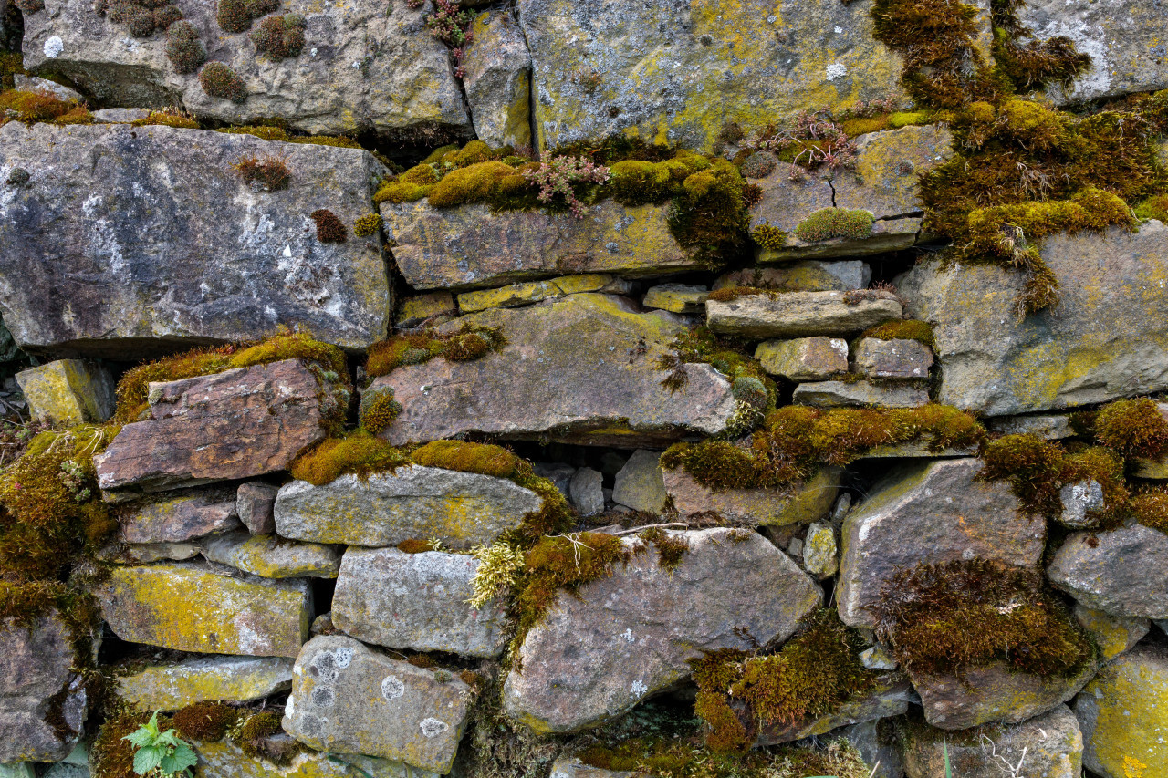 Moss covered stone wall texture