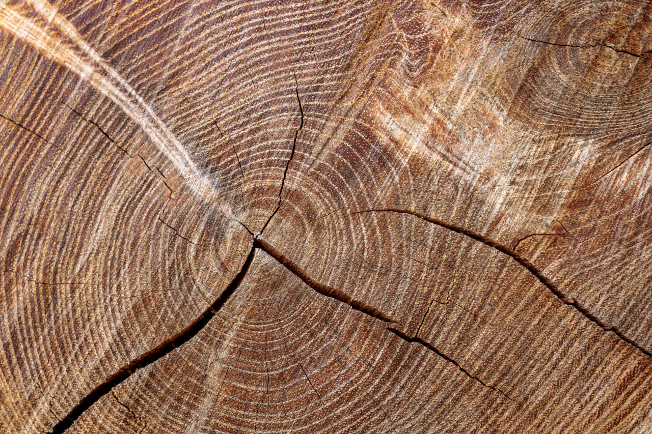 Light brown tree trunk texture with cracks