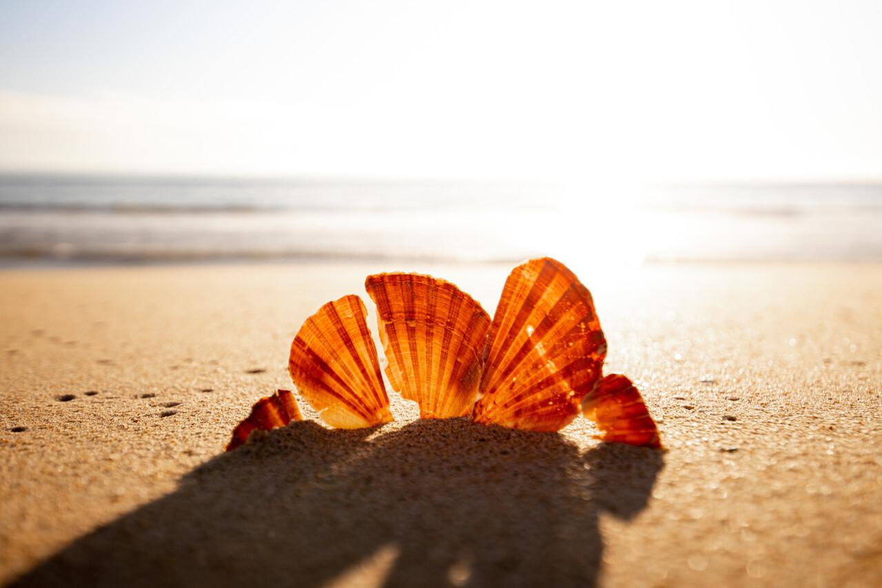 Sunlit shell on the beach