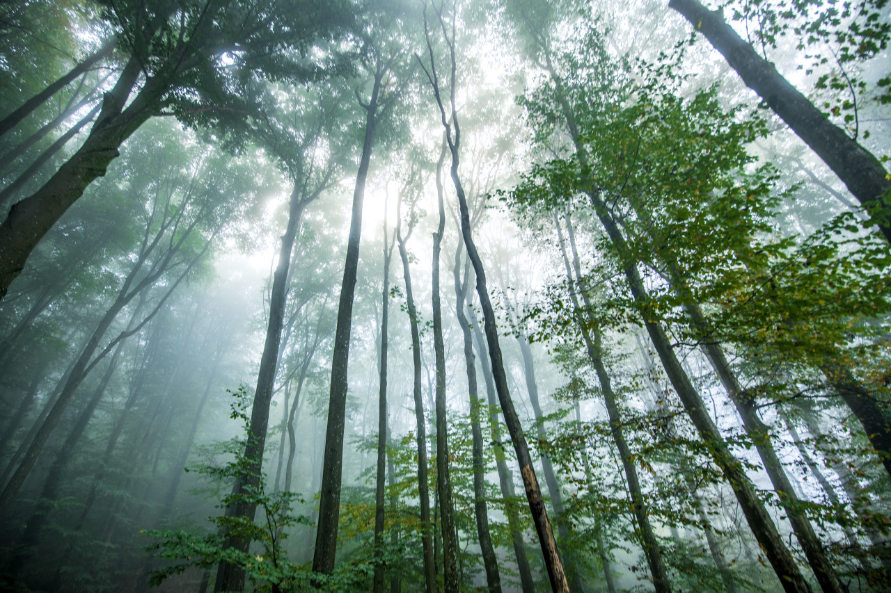 Mystical forest breathed in mist
