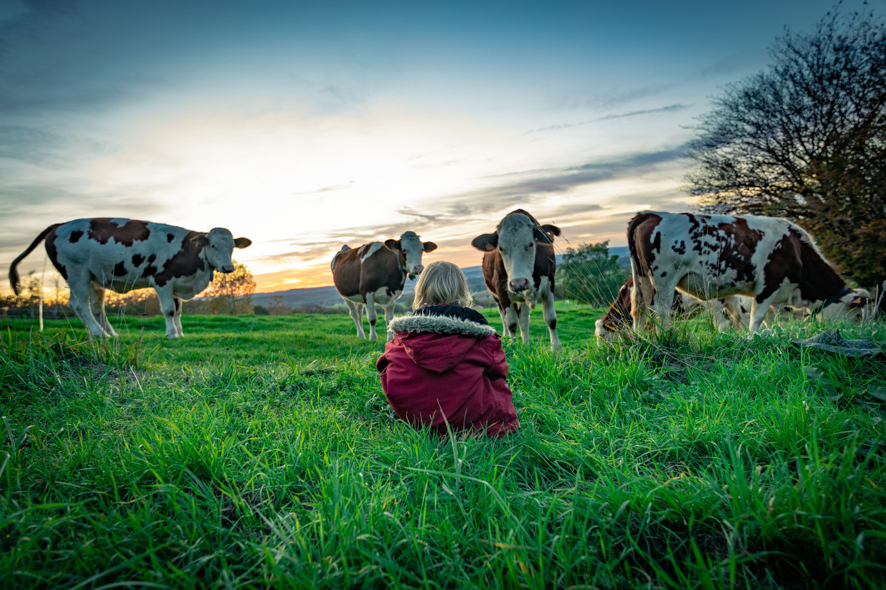Little girl sits with cows in a meadow