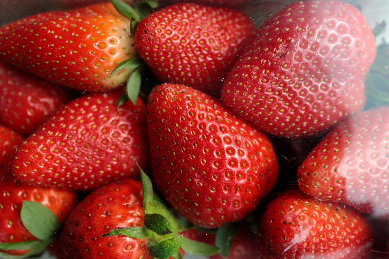 Strawberries packed in plastic