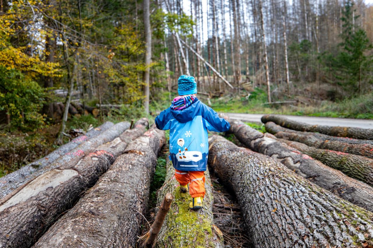 Child balances on tree trunk