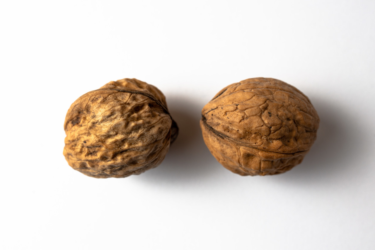 Two walnuts white background