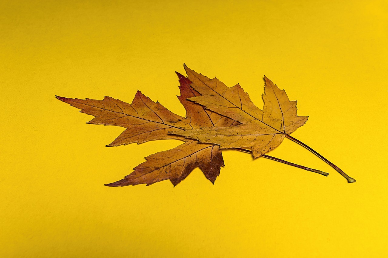 leaves yellow background