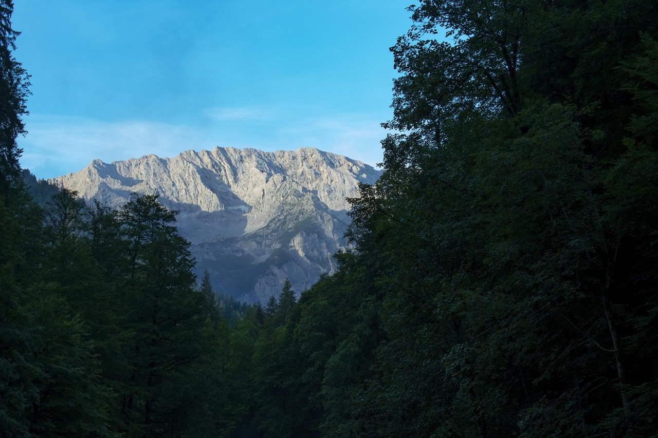 mountain between forest