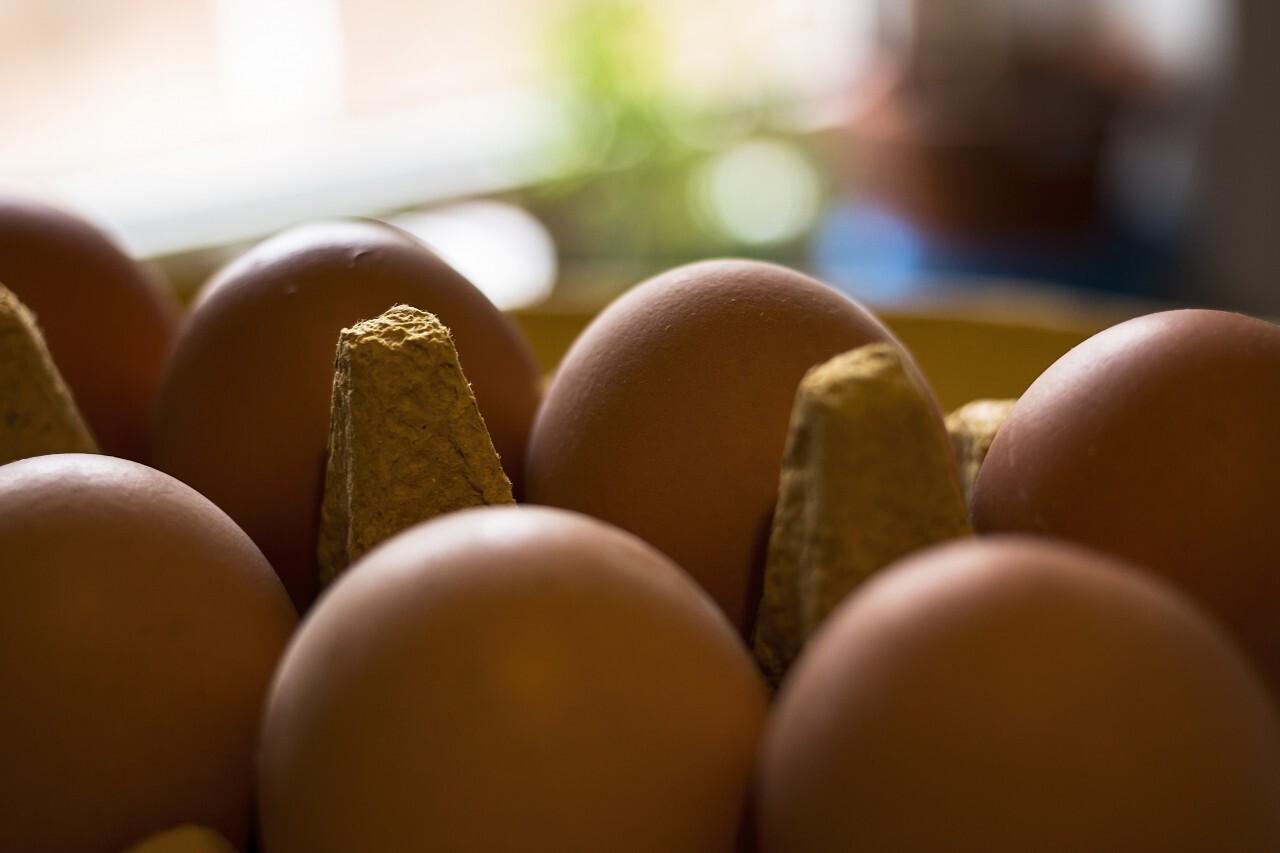 Farm raw fresh egg in pack
