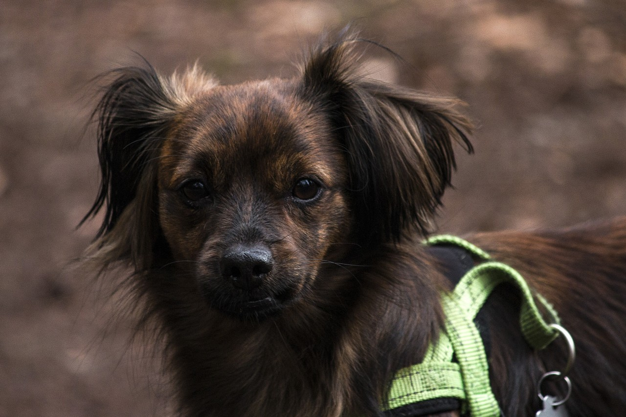 little cute dog in forest portrait