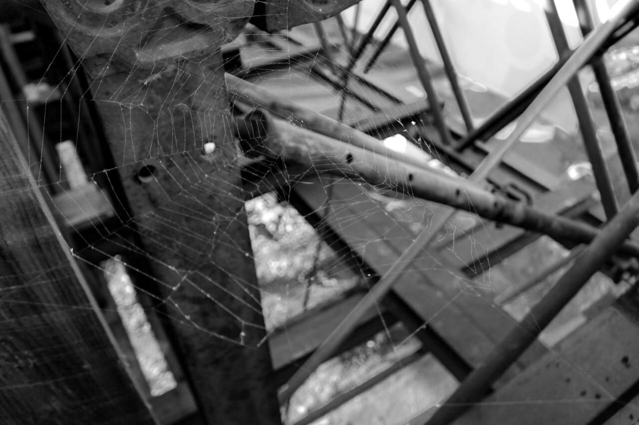 Spiderweb Black and White