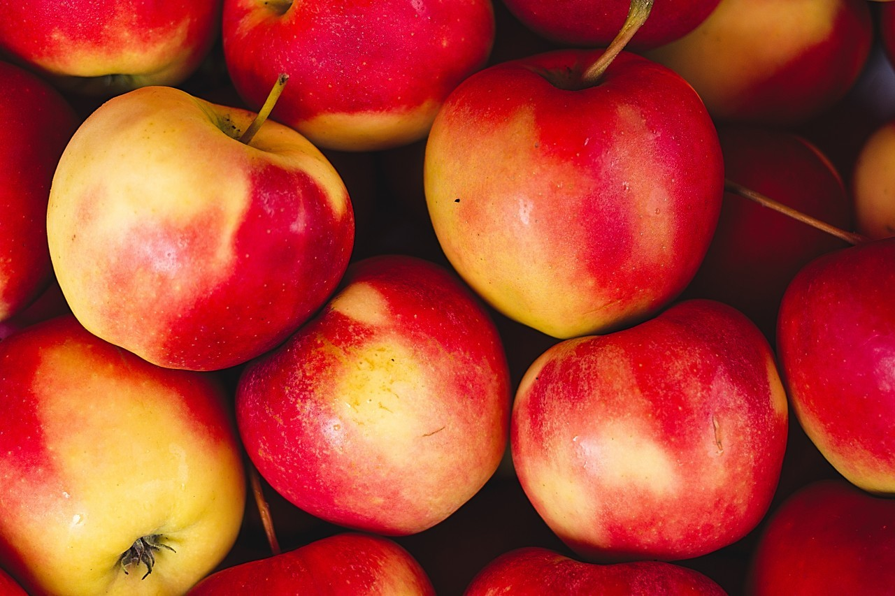 fresh apples from the market