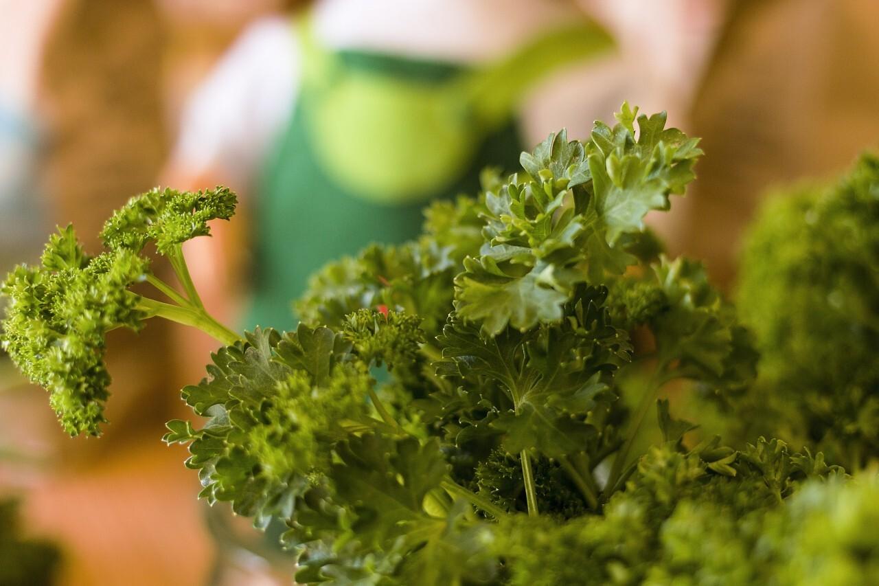 fresh parsley in glass