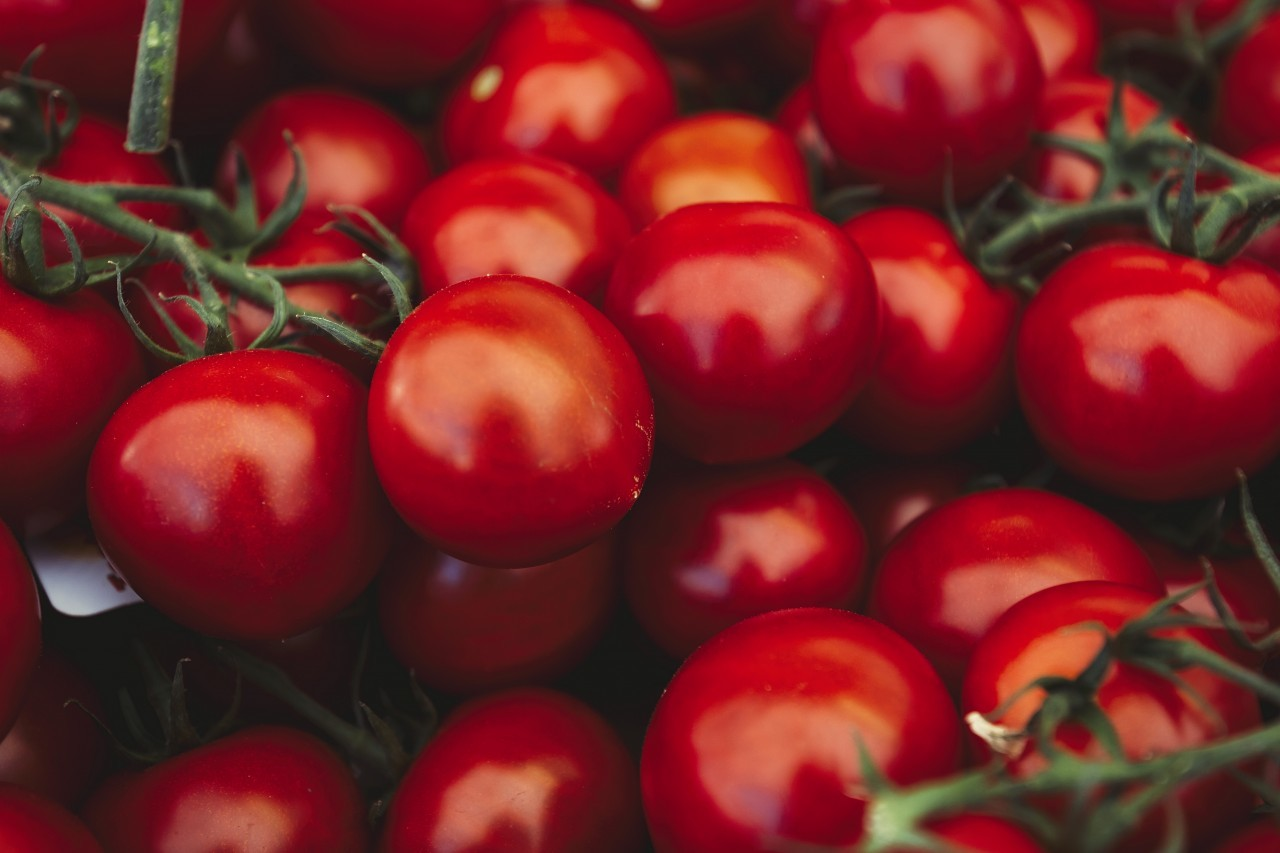 large amount of tomatoes