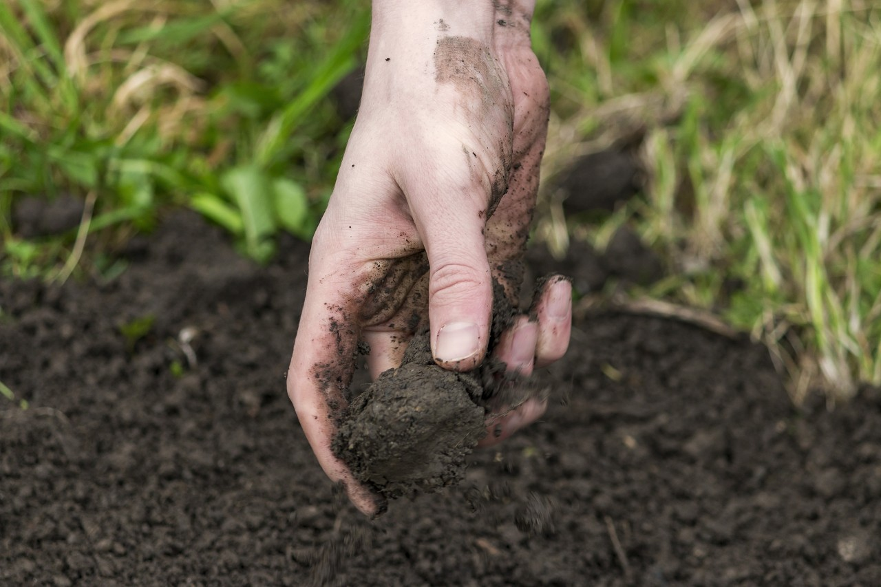 potting soil in hand