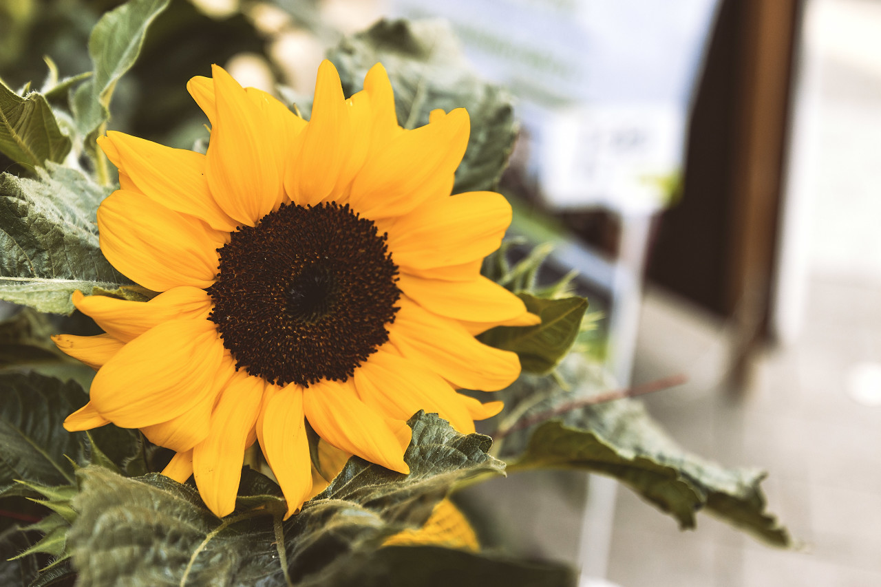 sunflower flower shop