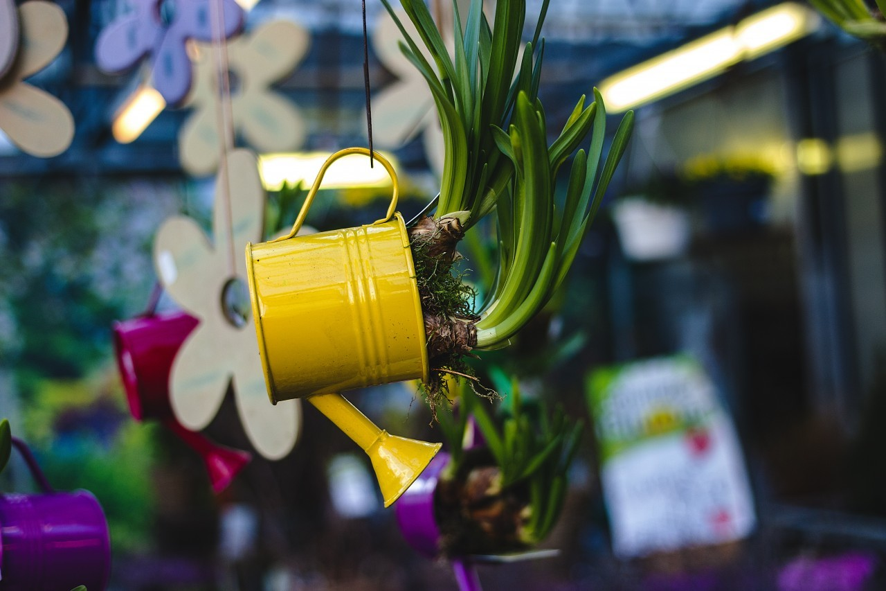 yellow watering can planted with flowers