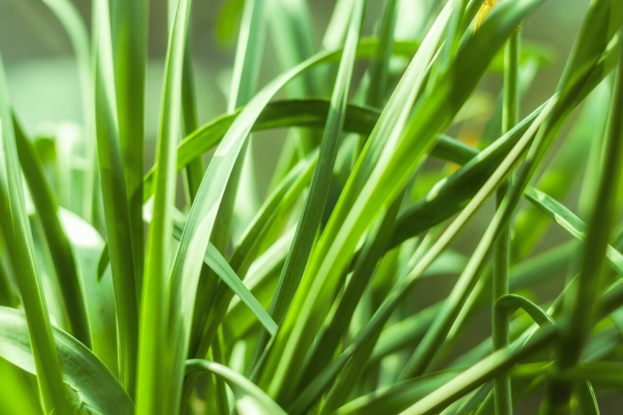 green grasses macro