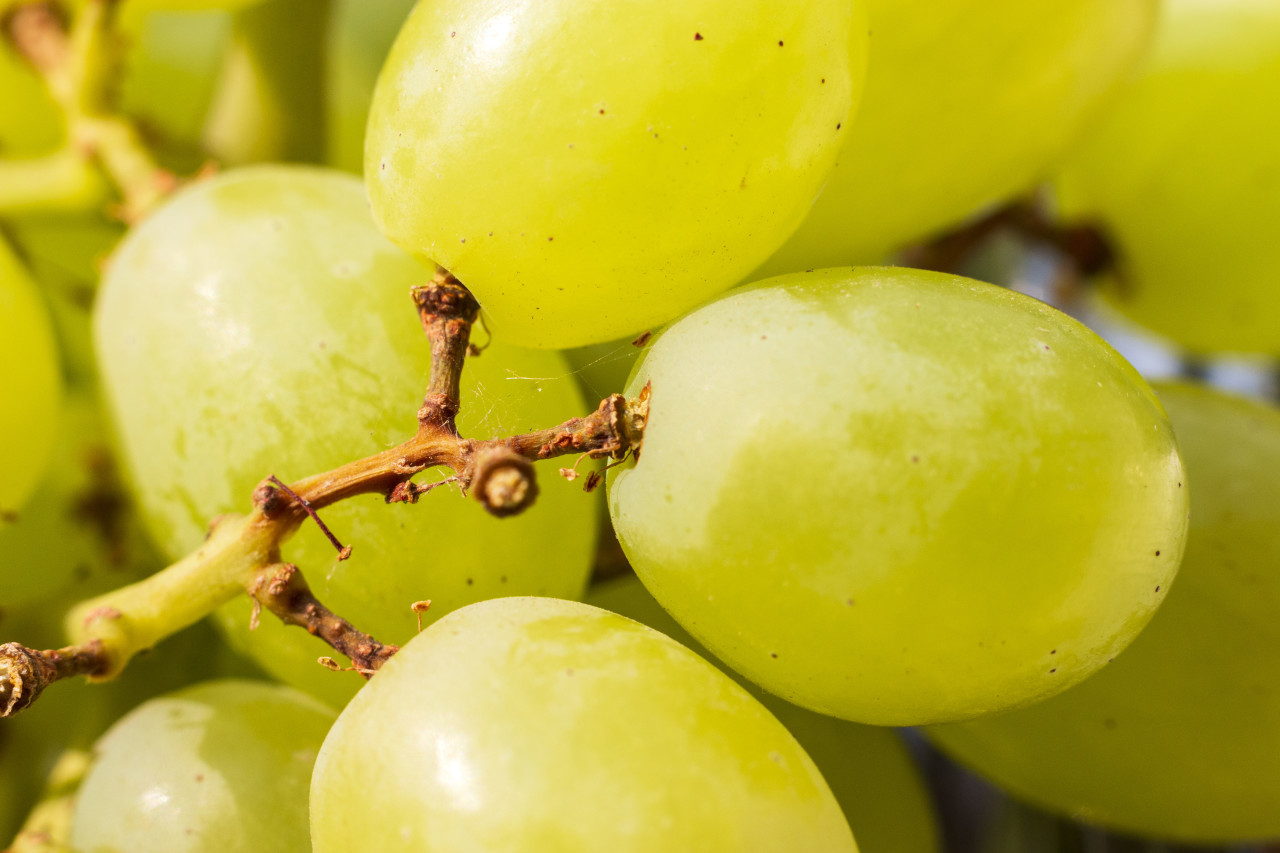 green ripe grapes background