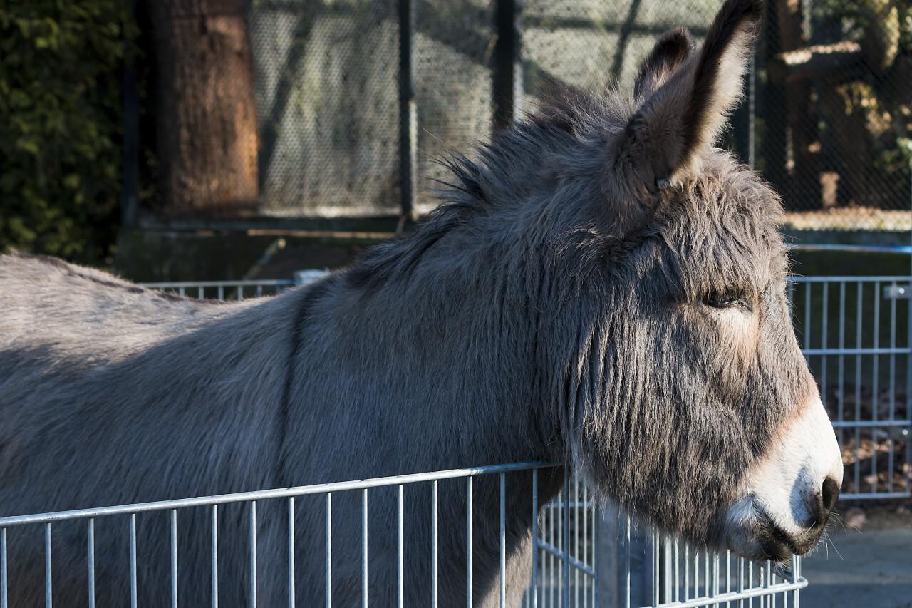 donkey at the fence