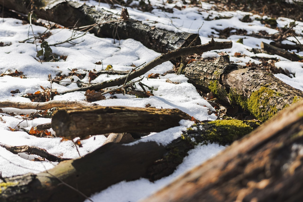 forest floor covered with snow