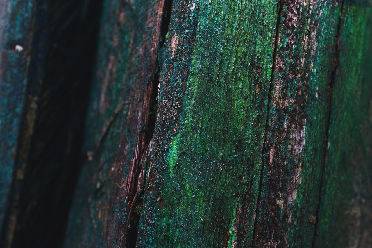 colorful grunge green wood texture