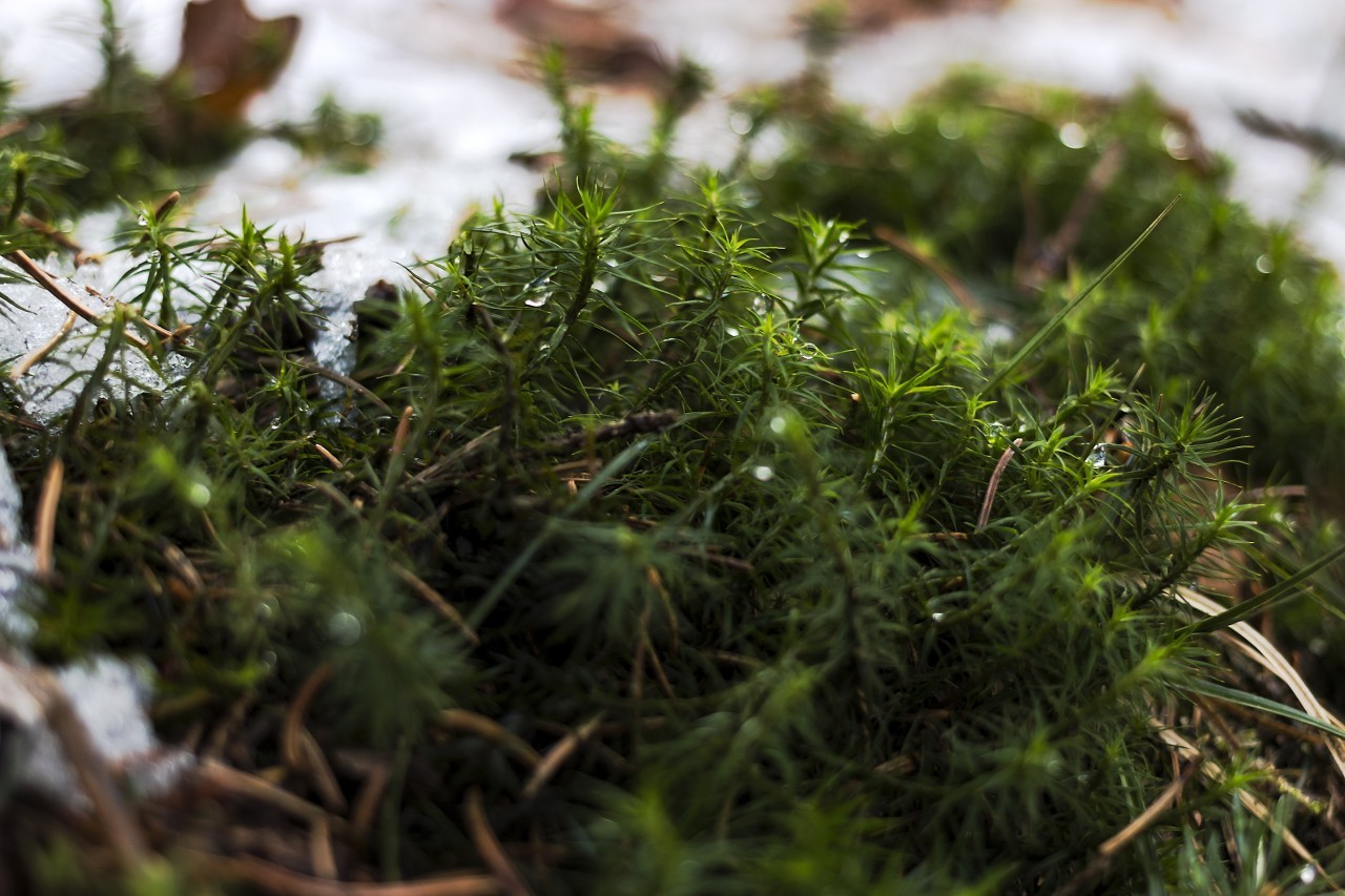 forest floor covered with moss and snow