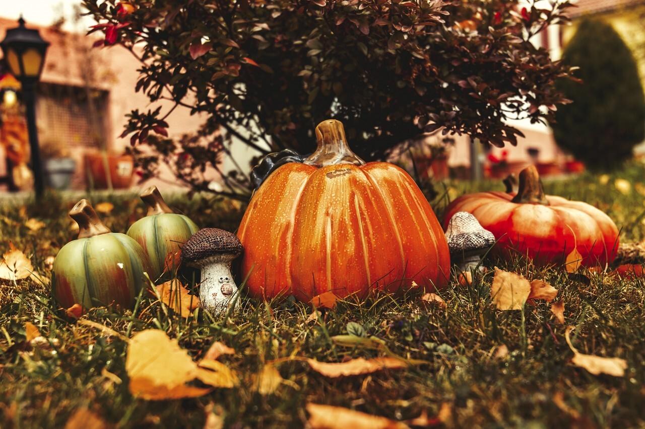 pumpkin and autumn leaves - fall garden autumn decoration