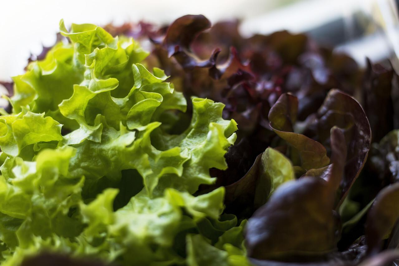 lollo rosso and  lollo bionda salad