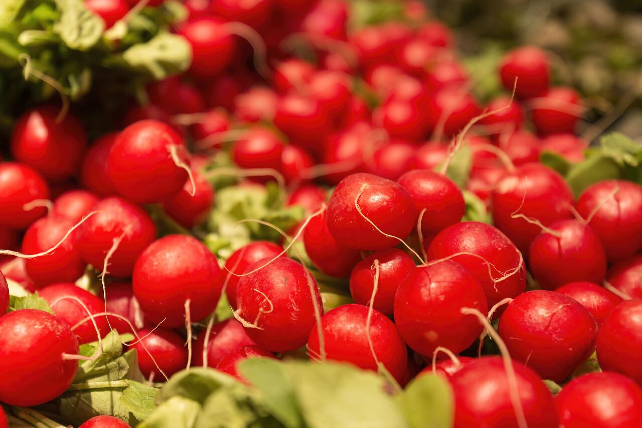 Heap of small red radish