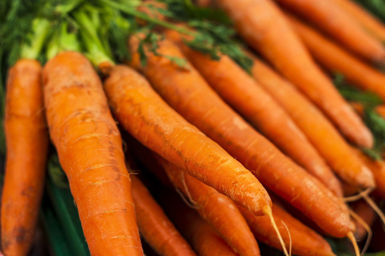 fresh carrots from the market
