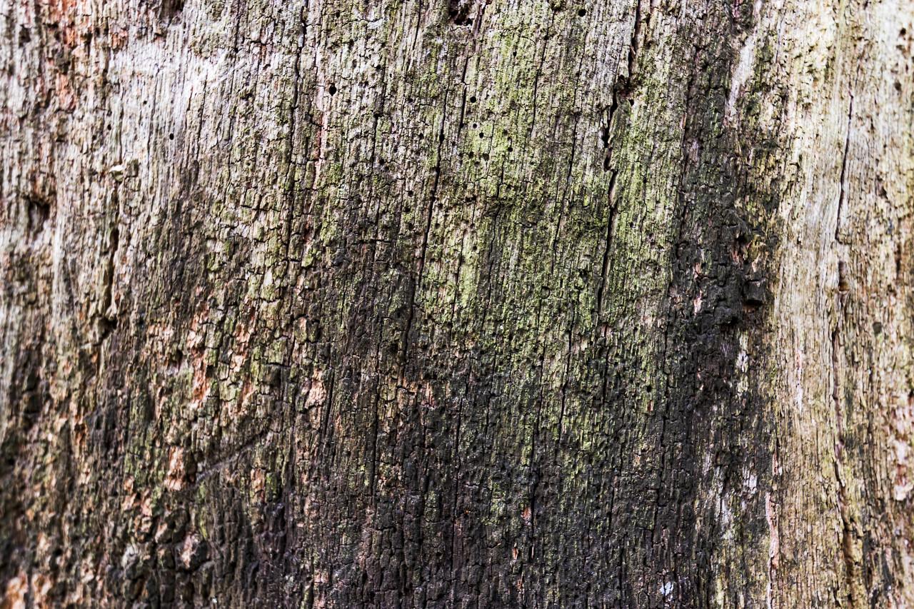rotting grunge wood texture background