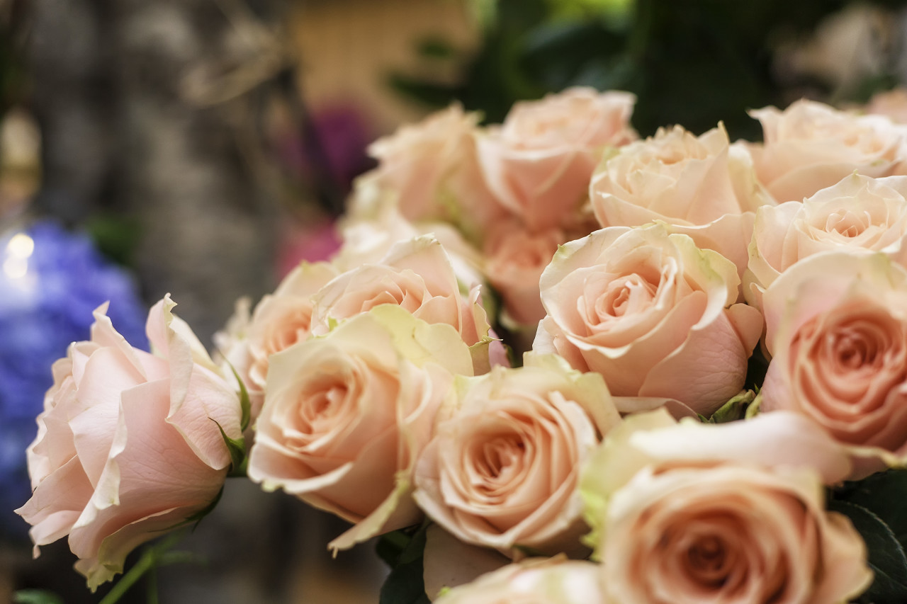 pink roses in a flower shop