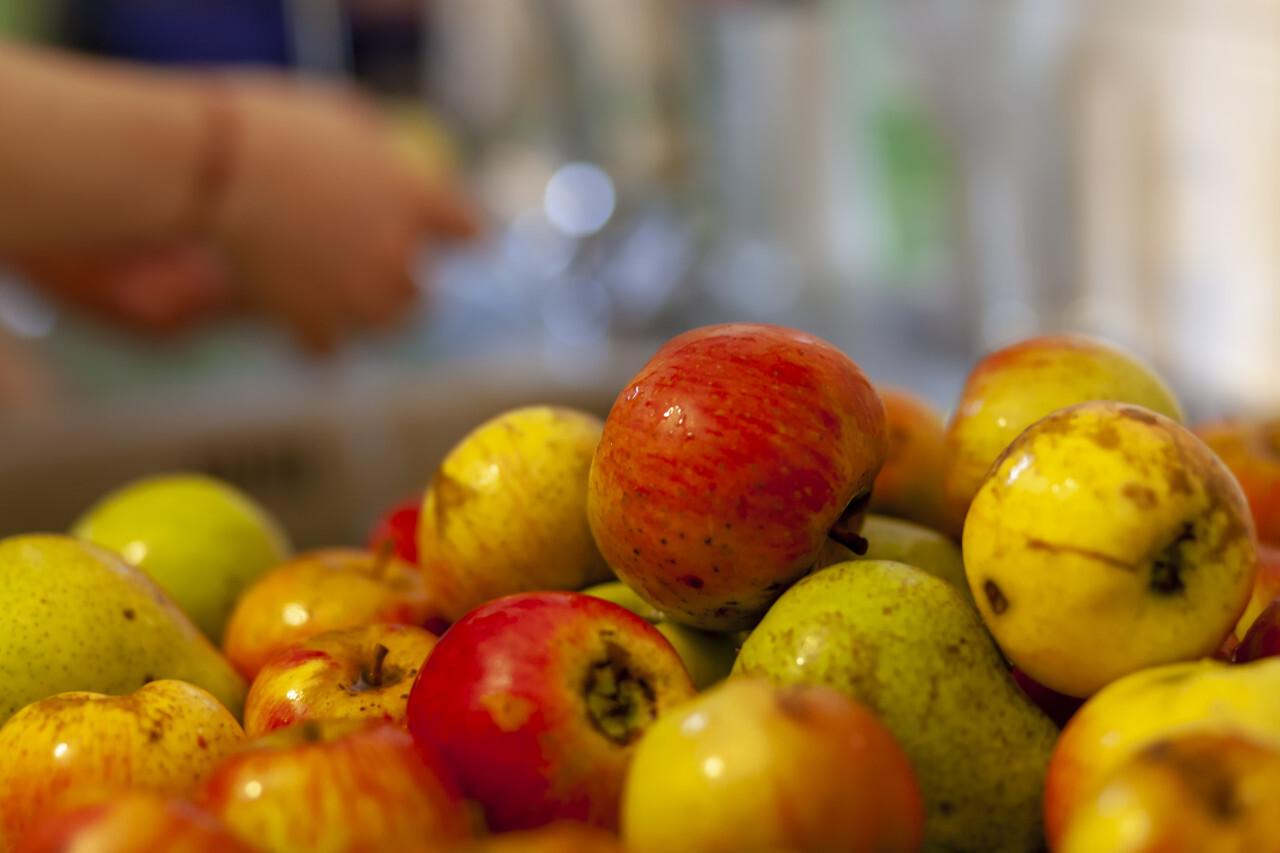 Apples for applesauce - battered apples