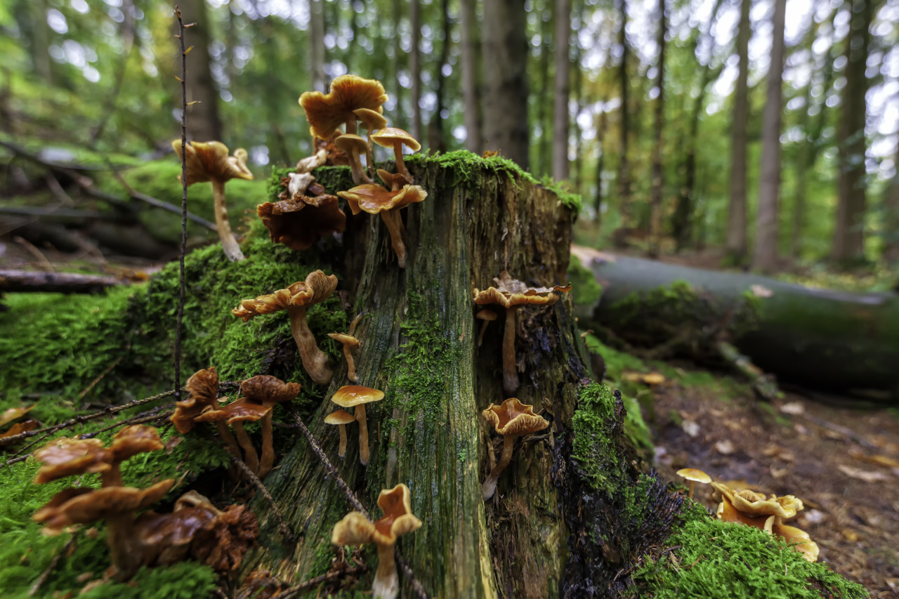 mushrooms in the forest on a tree trunk