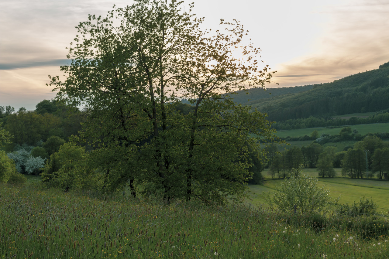 A tree in a beautiful rural landscape by germany