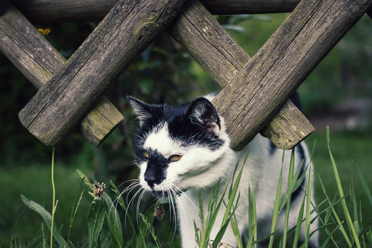 cat at the fence