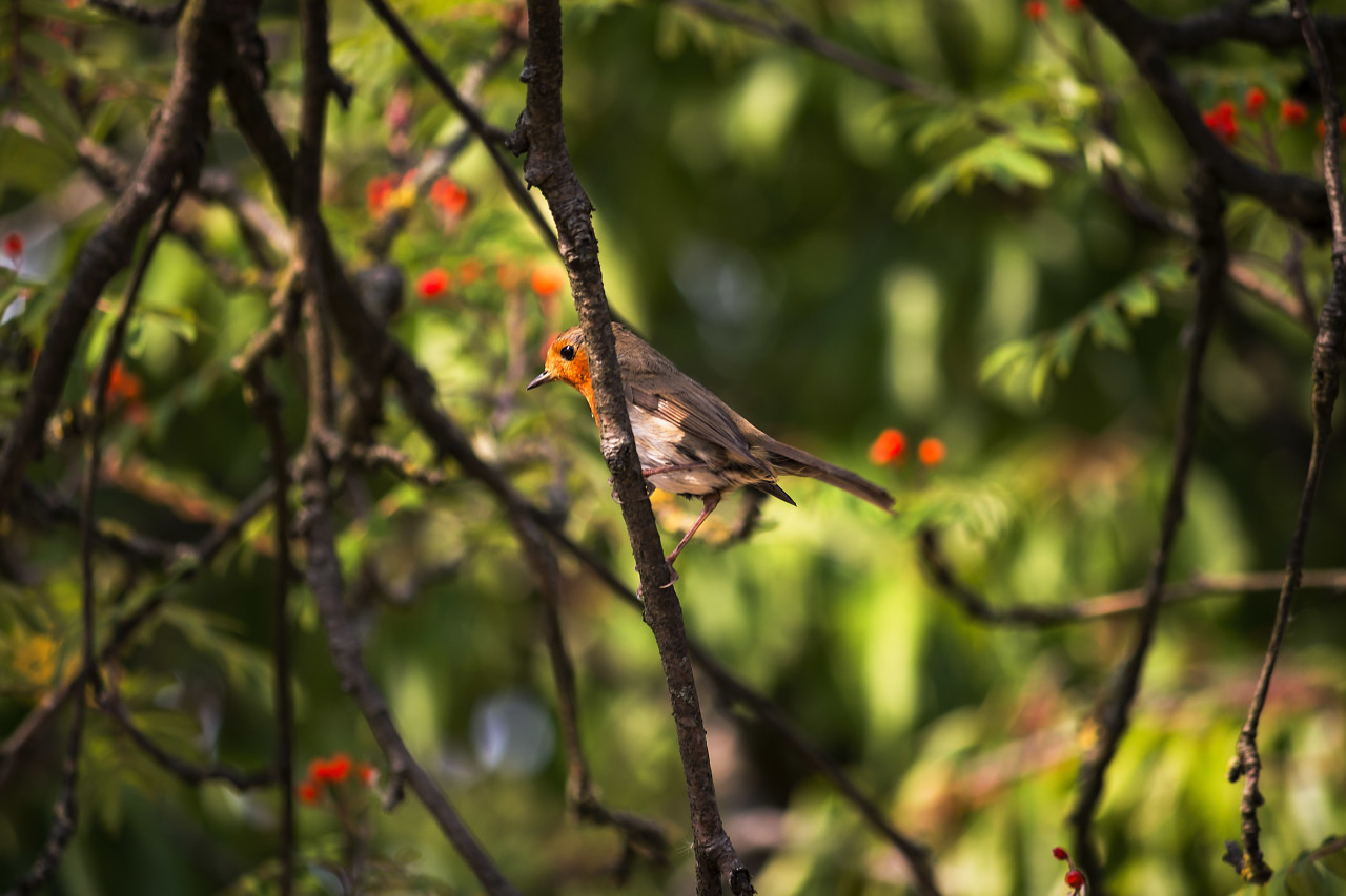 Robin on a birds tree