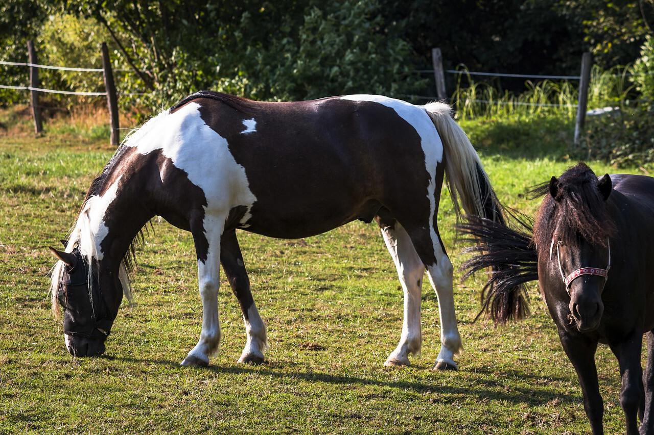 grazing cute horses