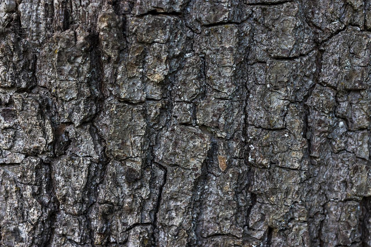tree barks texture
